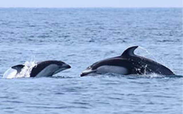 室蘭 イルカ・クジラウォッチング